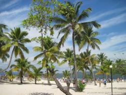 Palm trees line the beach of Cayo Levantado.jpg