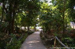Walkway to the beach at Cayo Levantado.jpg