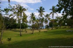 Cayo Levantado Park like grass area with Palm trees.jpg