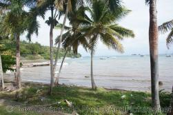 Palm trees near ocean at Samana.jpg